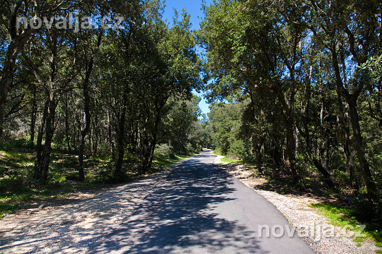 Cyklistický chodník vlese Dundo