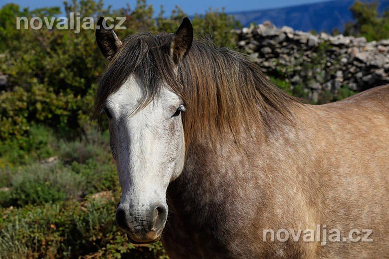 Kone na Hvare